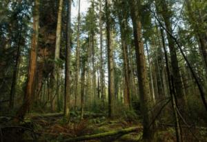 Trees Essay